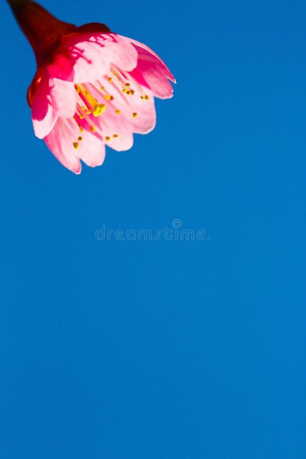 Frühlingsdusche stockfotos
