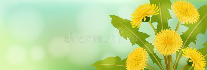 Frühlingsfahne mit Löwenzahnblume vektor abbildung