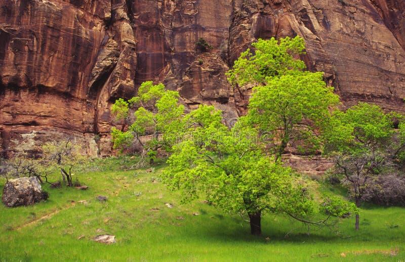 Frühlingsfarben in der Zion Schlucht lizenzfreie stockfotos