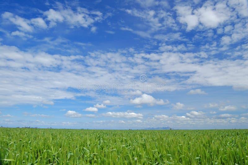 Frühlingsfeld lizenzfreies stockbild