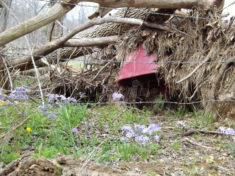 Frühlingsflut stockbild