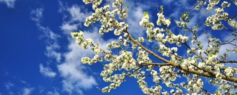 Frühlingsfrühjahr lizenzfreies stockfoto