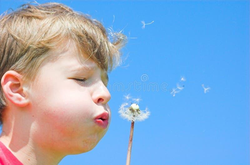Download Frühlingsfreiheit stockbild. Bild von betrieb, clear, nave - 860345