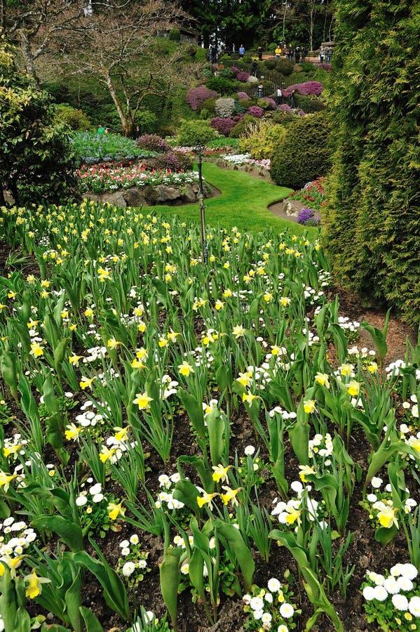Frühlingsgarten stockfoto