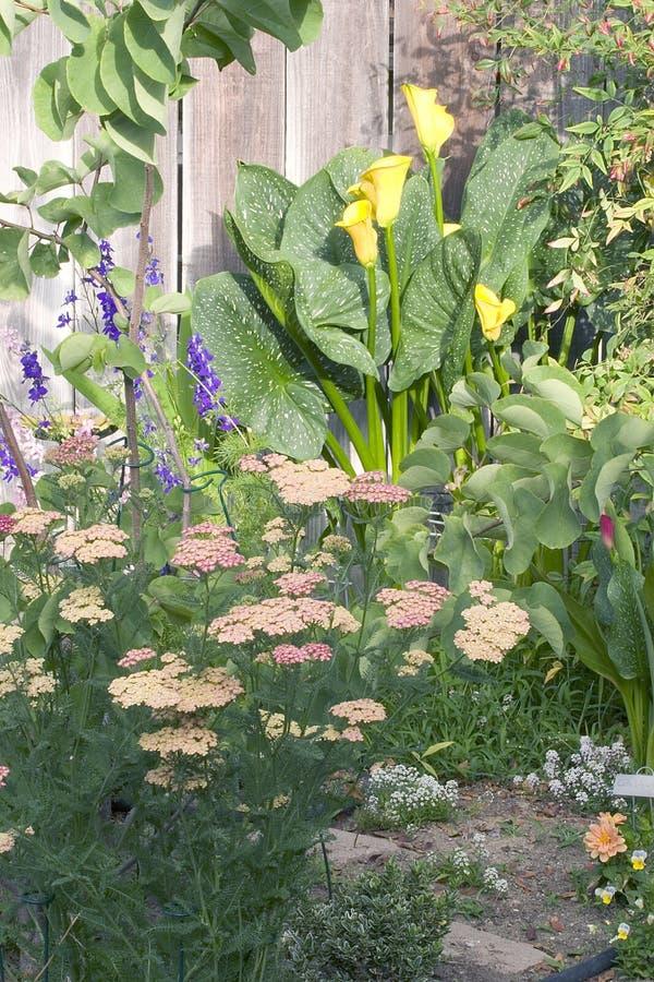 Frühlingsgartenblumensträuße lizenzfreies stockbild