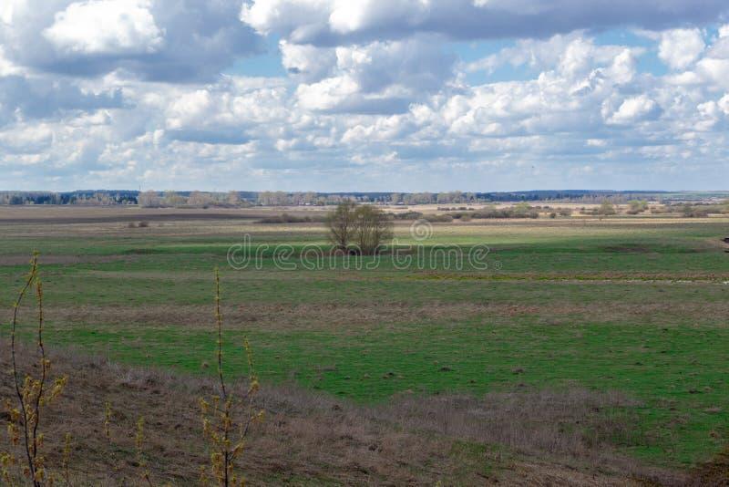 Frühlingsgrünebene mit weißen Kumuluswolken über ihr Landschaftsansicht zum Horizont lizenzfreies stockbild