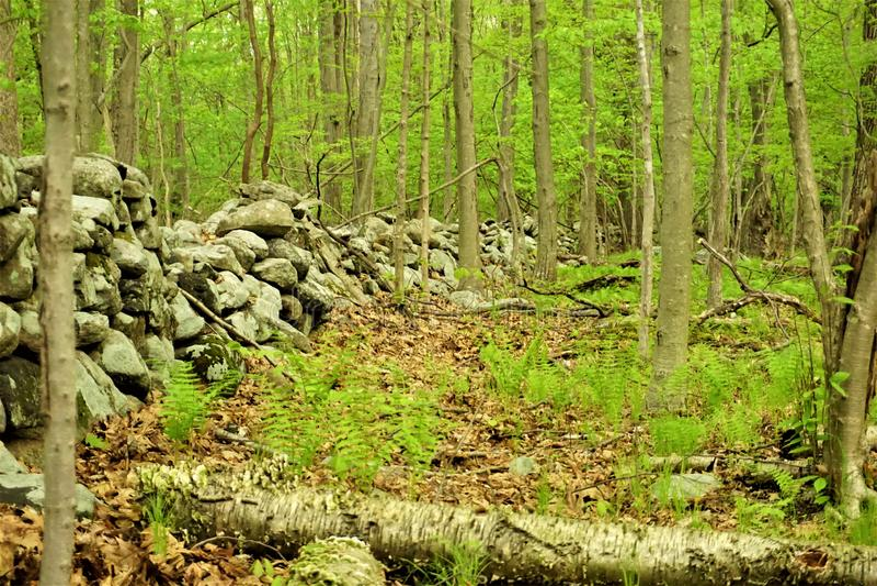 Frühlingsgrünwald mit Farnen und historischer Steinwand stockfotografie