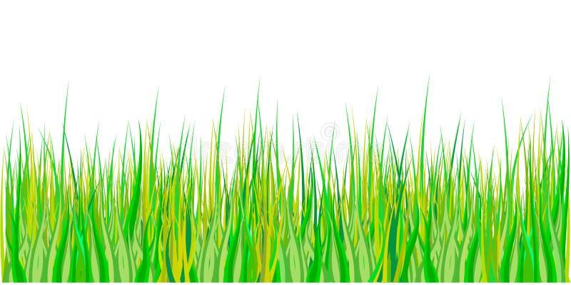 Frühlingsgras? Grün, frisch und gesund Ostern-Dekoration mit Frühlingsgras und -wiese blüht Getrennt auf weißem Hintergrund Vekto stock abbildung