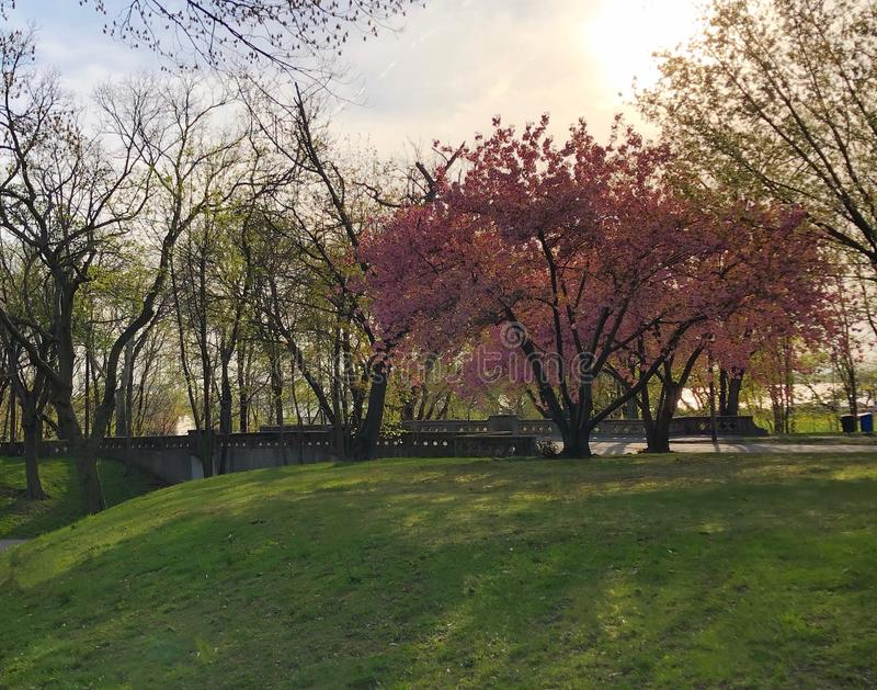 Frühlingshimmel-Blumenpark lizenzfreies stockfoto