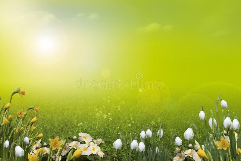 Frühlingshintergrund, Landschaft stockbild