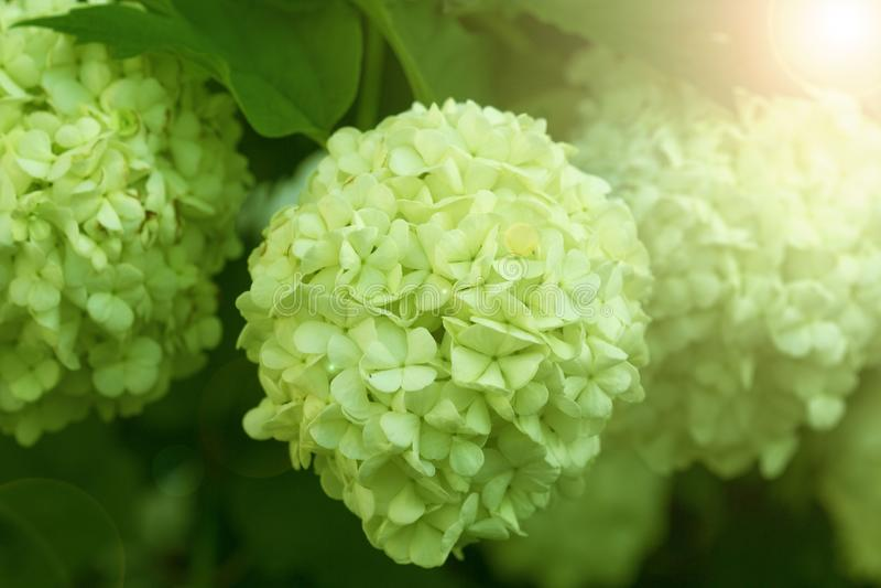 Frühlingshintergrund von den schönen Blumen, die im Garten blühen Weicher Fokus lizenzfreie stockbilder