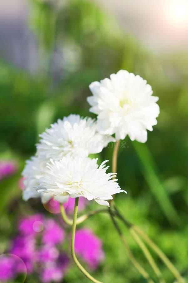 Frühlingshintergrund von den schönen Blumen, die im Garten blühen Weicher Fokus stockbild