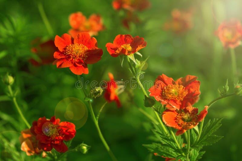 Frühlingshintergrund von den schönen Blumen, die im Garten blühen Weicher Fokus stockbilder