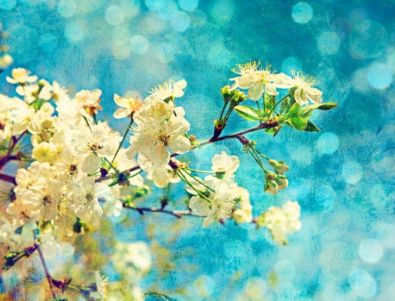 Frühlingskirschblumen stock abbildung