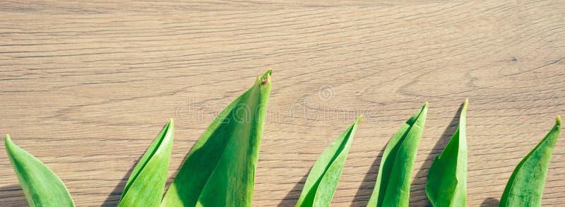 Frühlingskonzept - Tulpenblätter auf dem hölzernen Hintergrund stockbilder