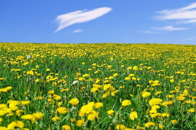 Frühlingslandschaft lizenzfreie stockfotos