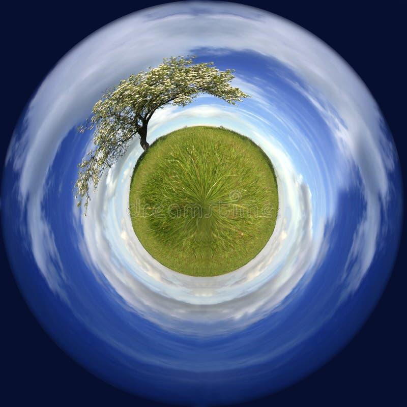Frühlingslandschaft in einer Kugel mit einem einsamen Baum lizenzfreie stockfotografie