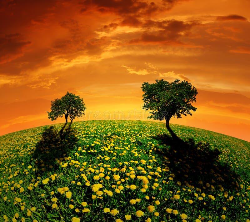 Frühlingslandschaft im Sonnenuntergang lizenzfreies stockbild