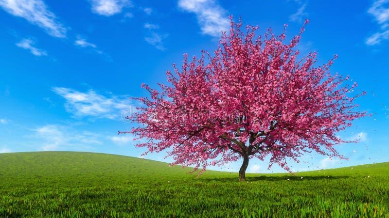 Frühlingslandschaft mit blühendem Kirschblüte-Kirschbaum stockfotografie