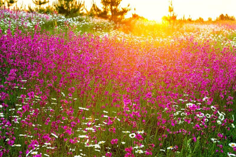 Frühlingslandschaft mit blühenden Blumen auf einer Wiese lizenzfreie stockfotografie