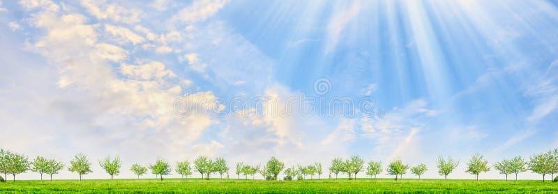 Frühlingslandschaft mit jungen Bäumen und Sonne strahlt auf Hintergrund des blauen Himmels aus stockfotografie