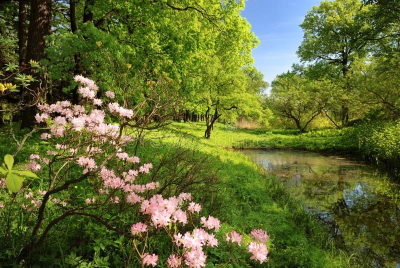 Frühlingslandschaft mit Teich stockfotografie