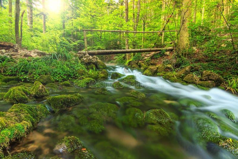 Frühlingslandschaft und Holzbrücke im Wald, Siebenbürgen, Rumänien lizenzfreies stockfoto