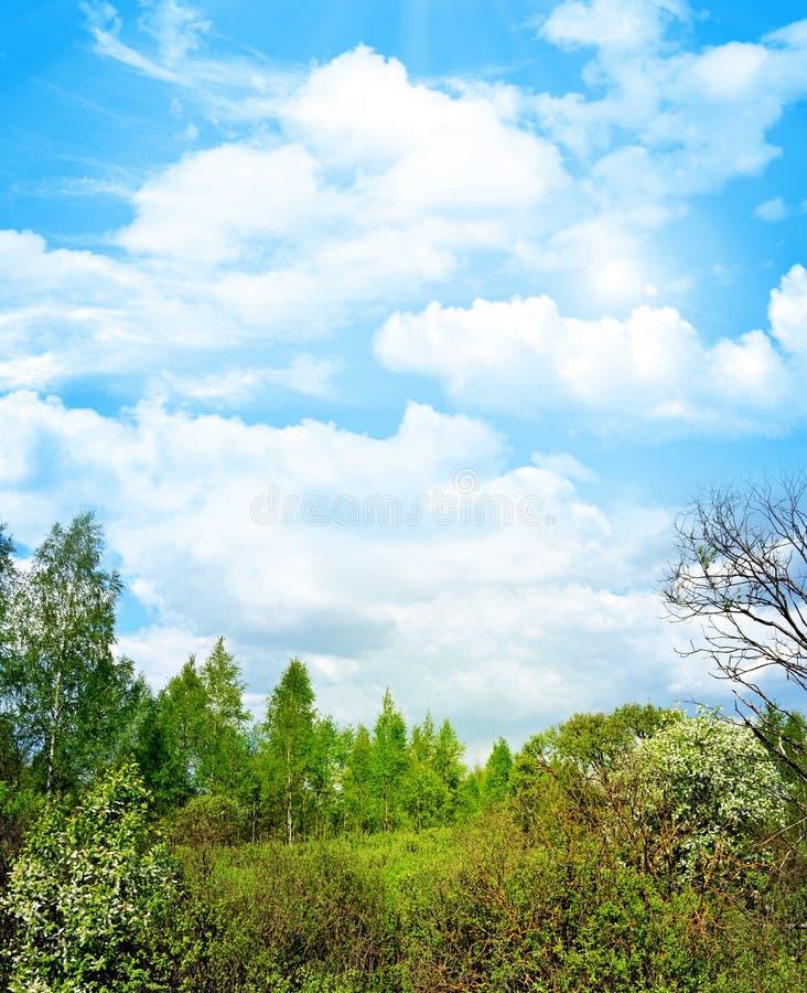 Frühlingslandschaftswald lizenzfreie stockbilder