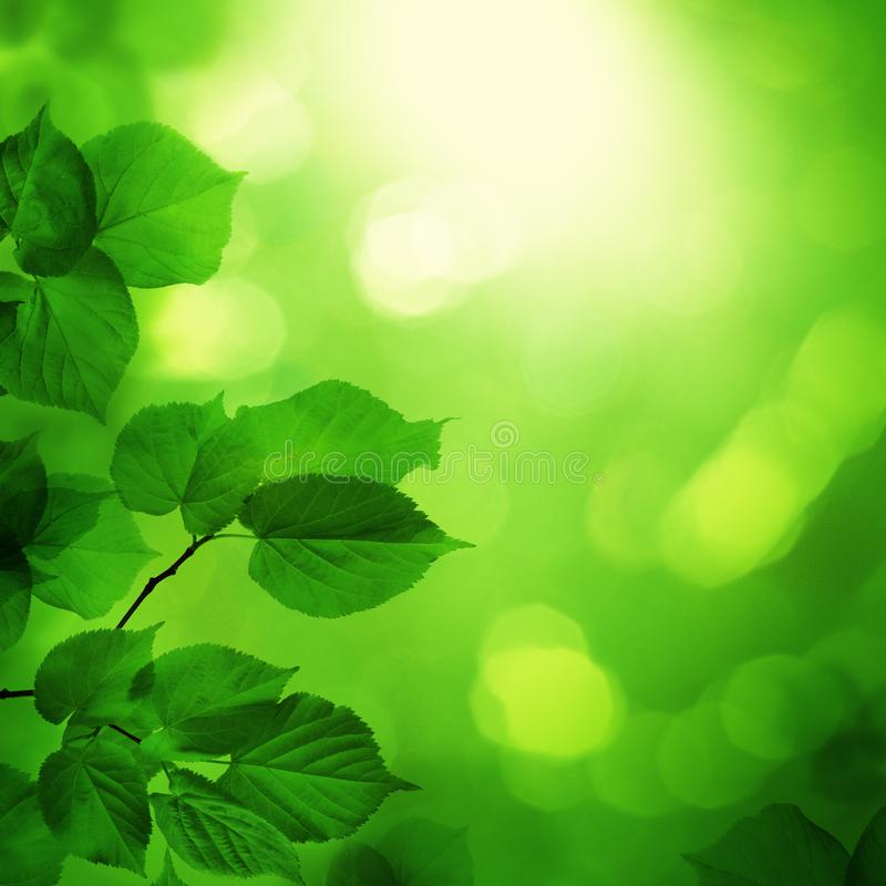 Frühlingsnachthintergrund mit grünen Blättern und Sonne bokeh Licht stockfotografie
