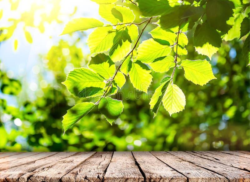 Frühlingsnaturhintergrund mit grünem Baumlaub und Holztischspitze stockfoto