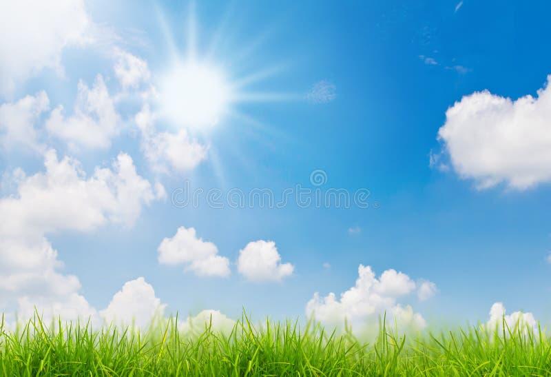 Frühlingsnaturhintergrund mit Gras und blauem Himmel lizenzfreies stockbild