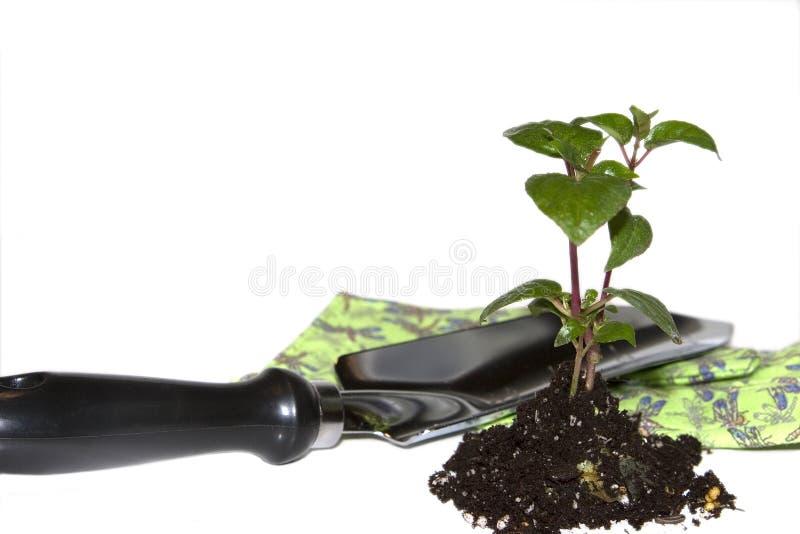 Frühlingspflanzen stockbilder