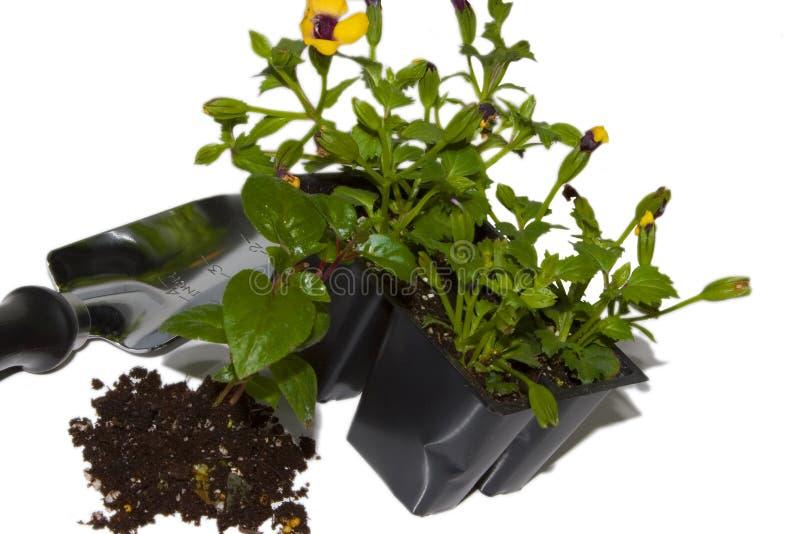 Frühlingspflanzen lizenzfreie stockfotos