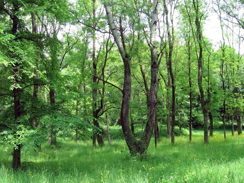 Frühlingsrasen lizenzfreie stockfotografie