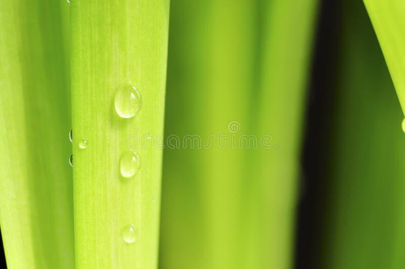 Frühlingsregentropfen auf Grün. stockbild