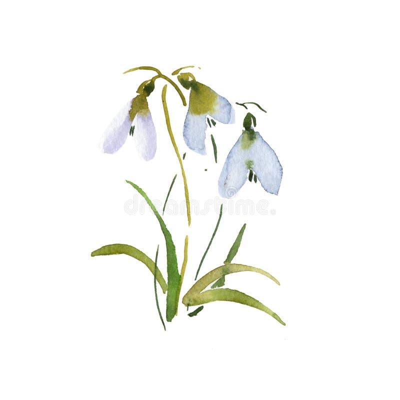 Frühlingsschneeglöckchenhandzeichnungsaquarell Groundhog Day-Blume blaues vektor abbildung