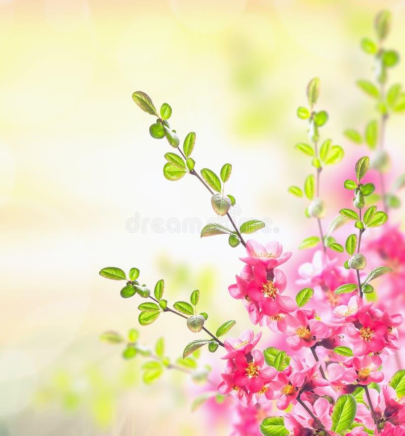 Frühlingssommer-Naturhintergrund mit rosa blühendem Busch lizenzfreies stockfoto