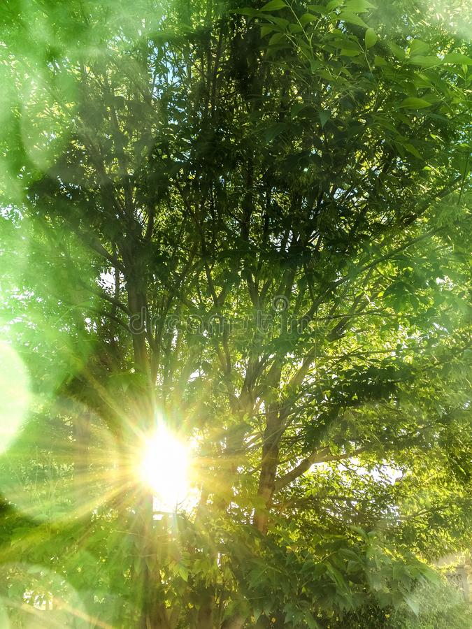 Frühlingssonne, die durch die Bäume filtert lizenzfreie stockbilder