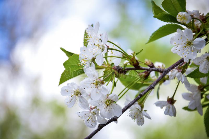 Frühlingsstimmung in den hellen Farben lizenzfreies stockfoto