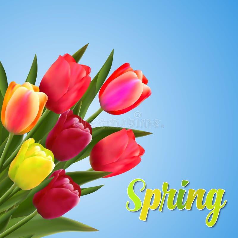 Frühlingstext mit Tulpenblume stock abbildung