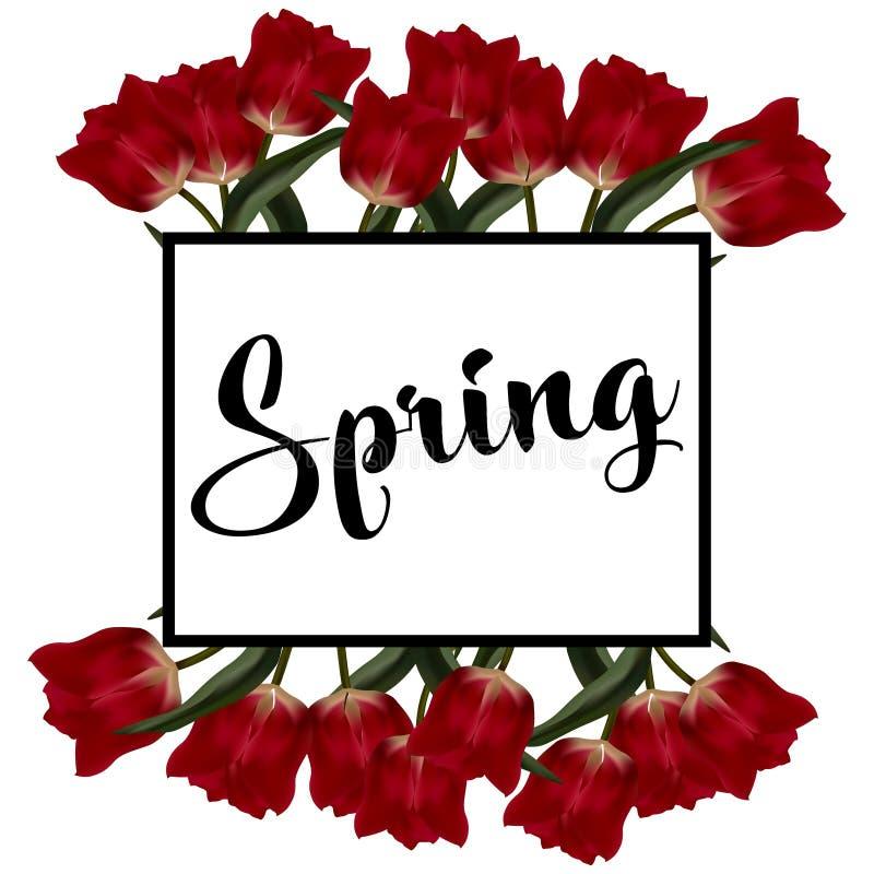 Frühlingstext mit Tulpenblume Auch im corel abgehobenen Betrag vektor abbildung