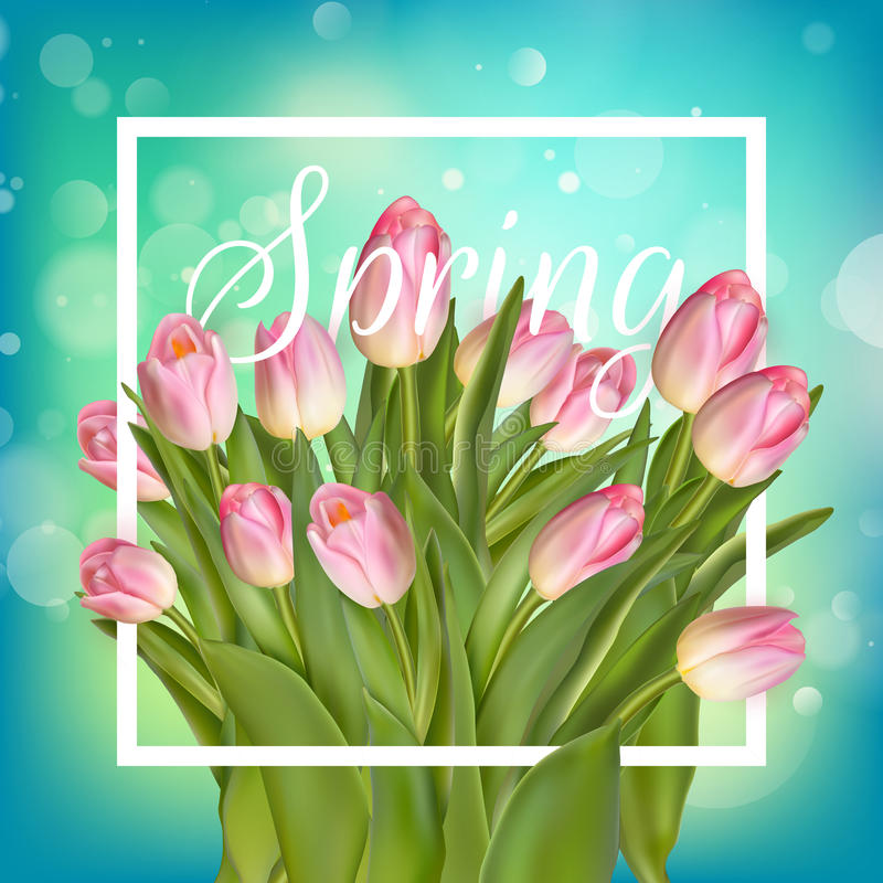 Frühlingstext mit Tulpenblume ENV 10 vektor abbildung