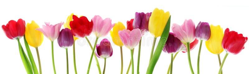 Frühlingstulpeblumen in einer Reihe stockbild