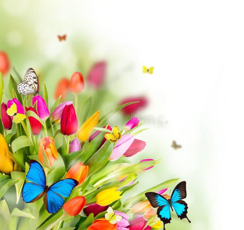Frühlingstulpen stockfotografie