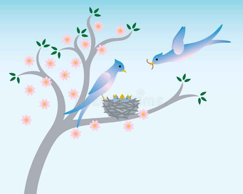 Frühlingsvögel mit Nest stock abbildung