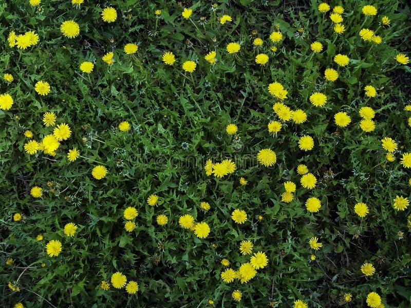 Frühlingsverwirrung lanscape stockbilder