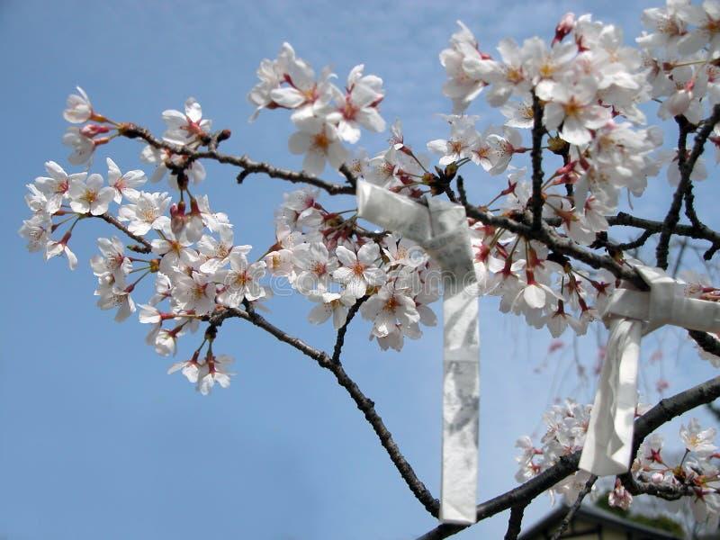 Frühlingswünsche stockfoto