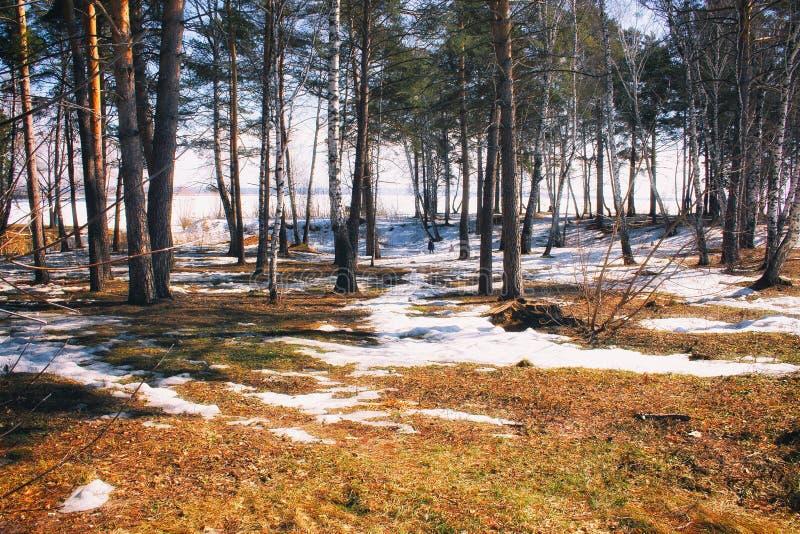Frühlingswald mit Sonnenglanz lizenzfreie stockbilder
