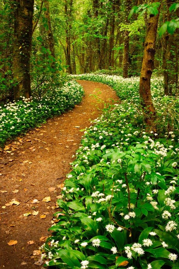 Frühlingswald mit weißen wilden Blumen lizenzfreies stockfoto