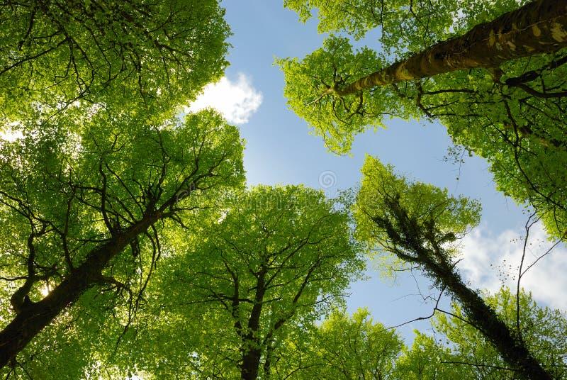 Frühlingswaldland stockfotografie